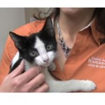 Shelter adopts policy that saves the lives of cats