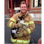 Firefighters perform delicate rescue of cat trapped in car engine
