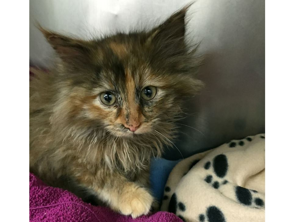 Constrction workers rescue kitten suffering from frostbite