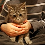 Kitten frozen to ground finds a home with his rescuers