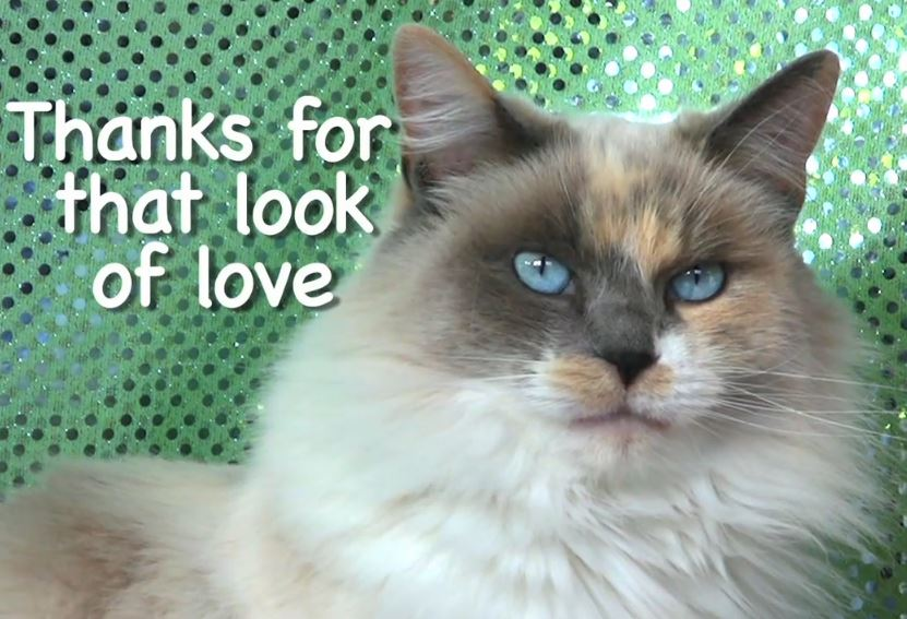 Thank you letter to My Cats