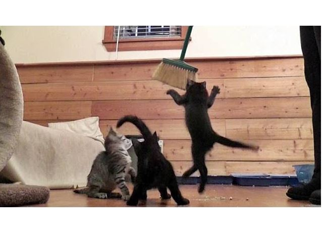 Cute Kittens Dance With A Broom