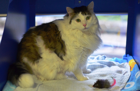 Fat cat Texas stuns shelter staff and goes on pre-Christmas diet