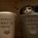 Guessing game: Which trash can is Maru in?