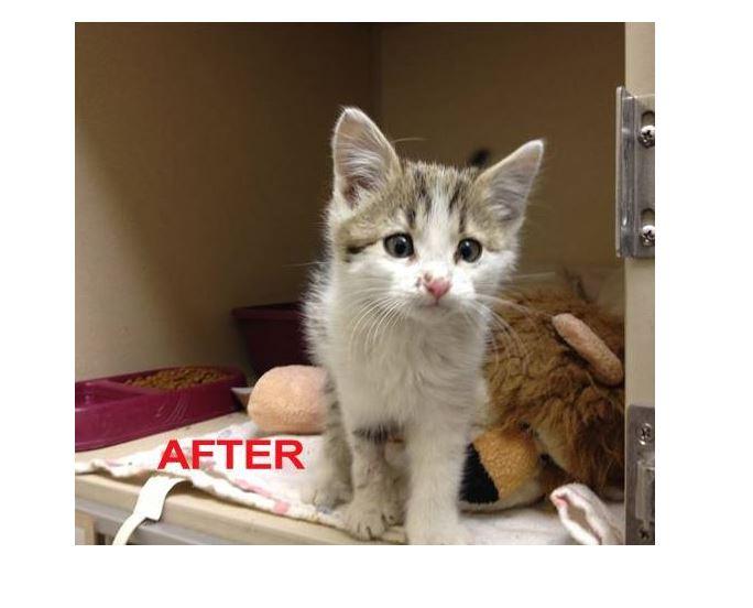 Good Samaritan Rescues Freezing Cold Wet Kitten From