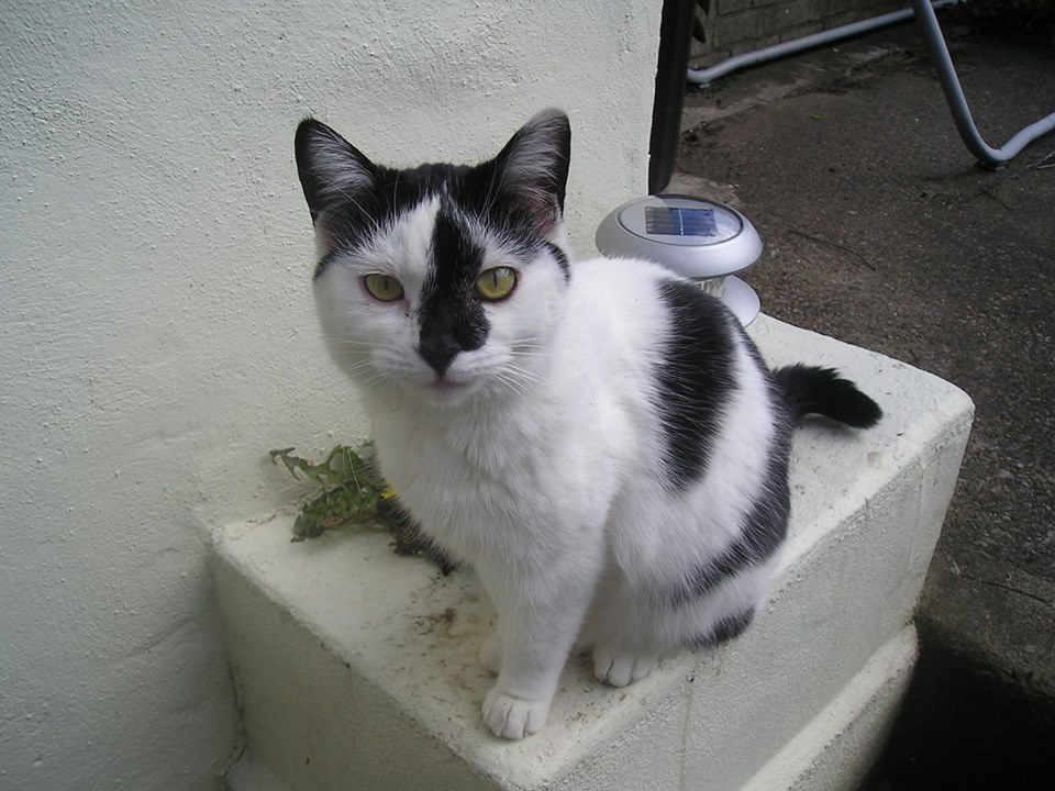 Cats Protection Morecambe