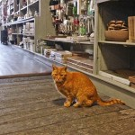 RIP Lewis: Beloved Ann Arbor Home and Garden Store Cat Dies at 20