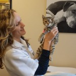 Surgery a success for Abby, kitten shot in eye with pellet