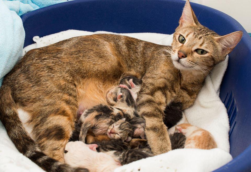Cat Brings Kittens To Me