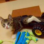 Devin – Kitten abused by a young child gets help and finds happiness