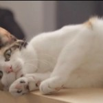 Meow Parlour: Inside New York's First Cat Cafe