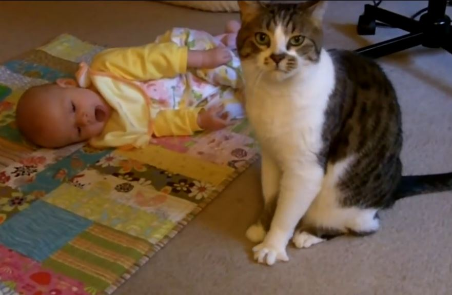 Cat Babysitter