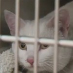 Seemingly lifeless cat is revived following house fire