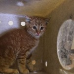 Kitten is rescued from tight spot after hitching a ride from Utah to Nevada