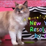 New Years Resolutions by Cats for 2015
