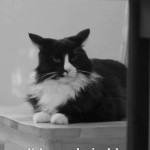 """Henri 10 – """"Reigning Cat, and Dog"""""""