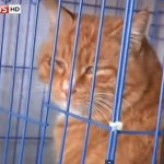 Animal lovers rescue 1,000 stolen cats in China