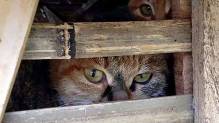 150128_Cat2