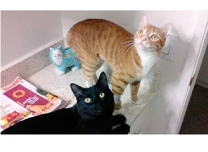 Cole and Marmalade: The new kitty pad