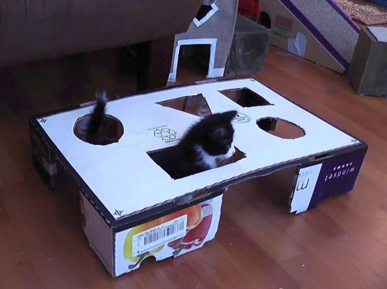 The Geometrics Of Kitten Fighting