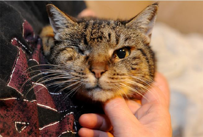 27 Year Old Cat Tuppence May Be World S Oldest Living Cat