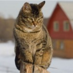 ALLEY CAT ALLIES OFFERS WINTER SAFETY TIPS FOR CATS AS TEMPERATURES DROP