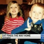 Missing cat traces family to their new home