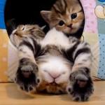 Kittens Falling Asleep Compilation