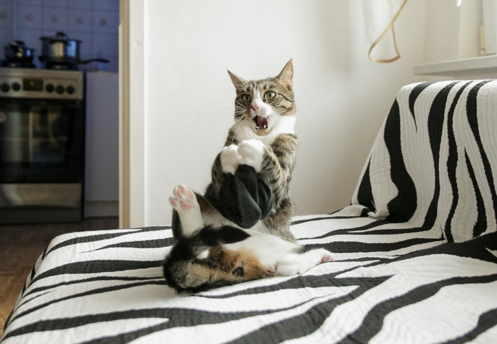 4 Reasons Why Nikita Is The Craziest Cat in the World
