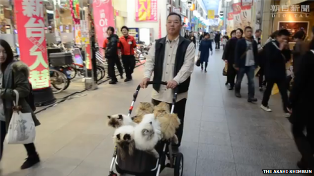 The Cat Man from Kyushu hopes to raise status of cats in Japan