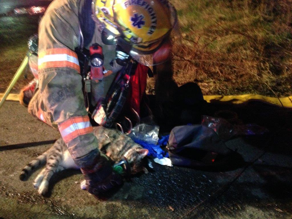 Cat is rescued from burning home and revived by firefighters