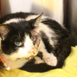 Bart update: Miracle Cat makes progress and Humane Society receives a threat