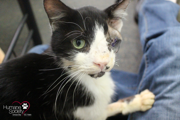 Bart the Miracle Cat: Update on his recovery and a Q&A on his custody case