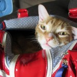 Behind The Scenes! Marmalade STAR CAT
