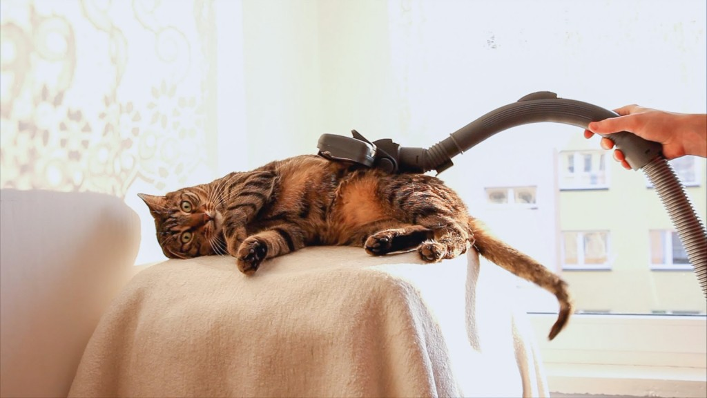 Bobo the Cat at the Vacuum Cleaner Spa