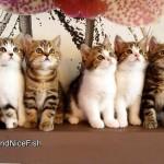 Epic Dance Battle of the Kittens