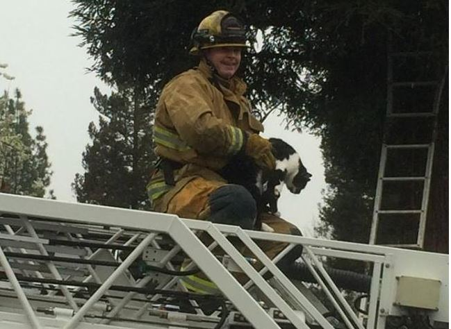 Firefighters save teen rescuer and cat from tall tree