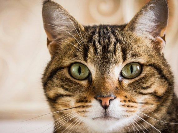 Cats win big with 2 Virginia legislative victories