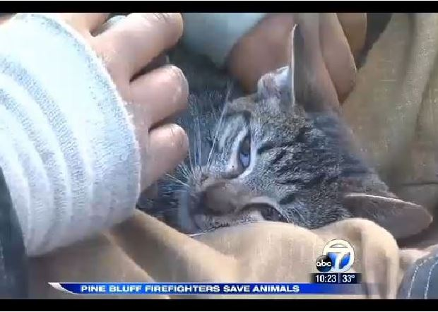 Firefighters rescue and revive kitten and puppy at house fire