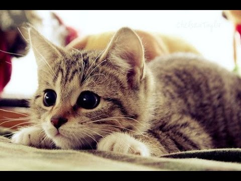 Kitten Pounce Attacks Compilation