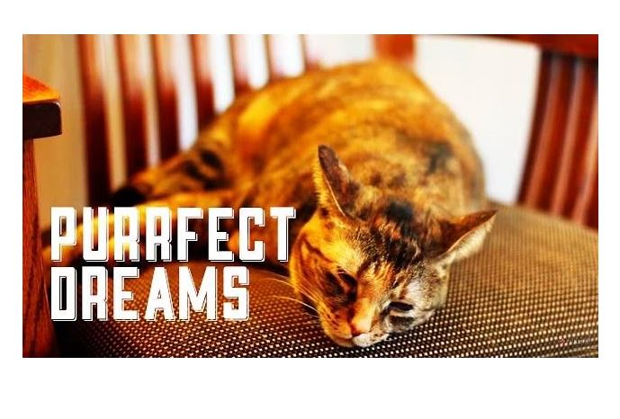 Purrfect Dreams