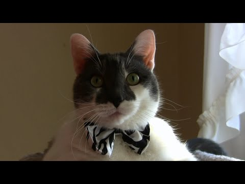 Valentine's Day Cat Edition – The Bachelor