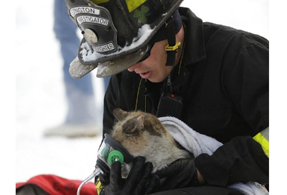 Cat who escaped fire is comforted as she gets oxygen from firefighter