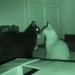 What Cats Do At Night…