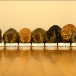 9 cats eat their dinner in all in a row
