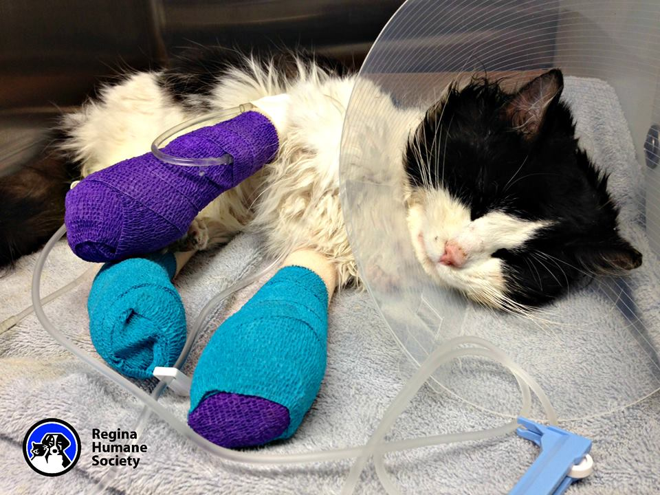 Bruce Almighty: Cat found with his legs bound gets help