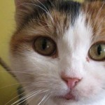 Long lost cat recently saved from death row to be reunited with owner