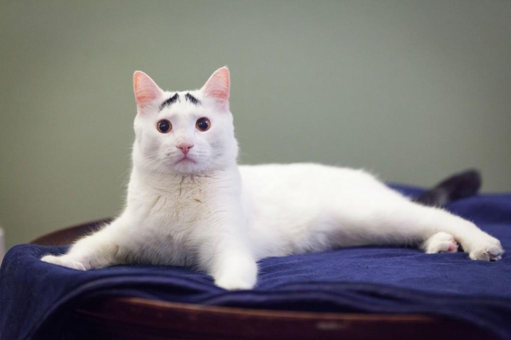 Sam-the-cat