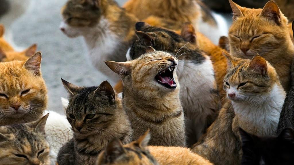 A Visit to Aoshima: Japanese Cat Island