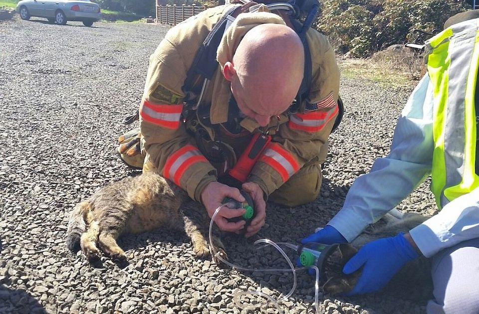 Firefighters resuscitate unconscious cats at house fire
